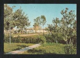 Saudi Arabia Picture Postcard Dammam Public Gardens View Card - Saudi Arabia