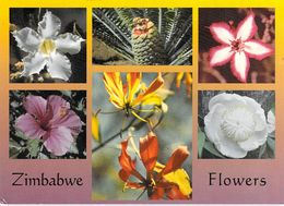 AFRIQUE ZIMBABWE Flowers  (fleurs White Sabi Star Cycad Hibiscus.....)  (Photo David TRICKETT F / 6621)*PRIX FIXE - Zimbabwe