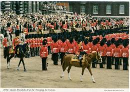 QUINN On Horseback  Horse Parade - Cavalli