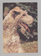 ANIMALS Pocket Calendar Fox Terrier 1995 RUSSIA Dogs Dog PLANETA № 689 - Calendari