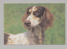 ANIMALS Pocket Calendar Saluki 1995 RUSSIA Dogs Dog PLANETA № 740 - Calendari