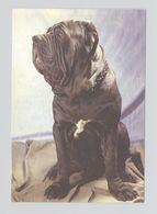 ANIMALS Pocket Calendar Mastino Napoletano 1995 RUSSIA Dogs Dog PLANETA № 764 - Calendari
