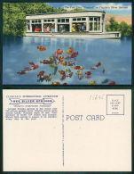 USA [OF #15645] - FLORIDA FL - THE FISH PLAY FOOTBALL AT FLORIDA'S SILVER SPRINGS - Jacksonville