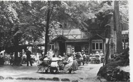 AK 0826  Pfaffenstein ( Sächs. Schweiz ) - Gaststätte / Verlag Weyhmann Um 1950-60 - Königstein (Sächs. Schw.)