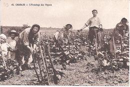89 - CHABLIS - 18. - L'Ecoulage Des Vignes - Belle Sépia - Edit. L. Pothain, Auxerre - Chablis