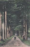 TERVUREN / HET PARK / EEN LAAN / ANIMATIE / LE PARC / UNE ALLEE  1912 - Tervuren