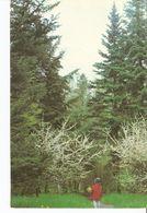 K2. Real Photo Postcard By Gailitis Latvia Liesma 1975 Arboretum In The Tervete Nature Park - Forest Girl - Latvia