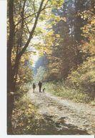 K2. Real Photo Postcard By Gailitis Latvia Liesma Annele Annelle Path Trail In Tervete Forest Nature Park Children Dog - Latvia