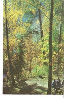 K2. Real Photo Postcard By Gailitis Latvia Liesma 1975 The Tervete Forest Nature Park Path Trail - Latvia