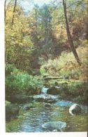 K2. Real Photo Postcard By Gailitis Latvia Liesma 1975  The Tervete River - Latvian Forest Nature - Latvia