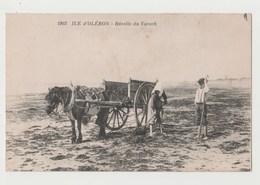 CPA ILE D' OLERON Récolte Du Varech - Ile D'Oléron