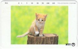 JAPAN F-555 Magnetic NTT [231-375] - Animal, Cat - Used - Japan