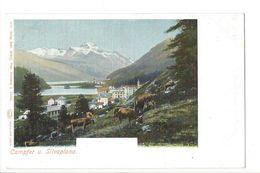 19130 - Campfer Und Silvaplana Vaches - GR Grisons