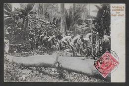 GHANA - GOLD COAST - Working A Plantation For Their Chief - Ghana - Gold Coast