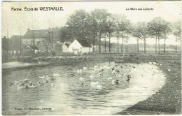 Ferme. Ecole De Westmalle. Mare Aux Canards. Cachet Lacroix, Cultivateurs. - Malle