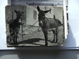 Kroatië Croatia 2x Donkey - Kroatië