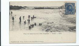 CHILE CHILI - CAMARONES En El RIO COQUIMBO - SERENA - Old Postcard - Buy It Now ! - Chile