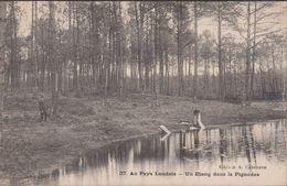 40-AU PAYS LANDAIS-Un Etang Dans Le Pignadas...  Animé  Lavandière - France