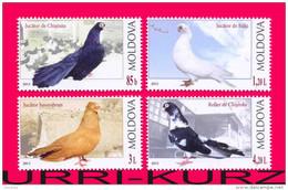 MOLDOVA 2012 Nature Fauna Birds Bird Pigeons Pigeon 4v Mi799-802 MNH - Birds