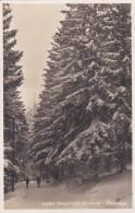 Chaumont En Hiver - Paysage (9380) * 28. 1. 1929 - NE Neuenburg