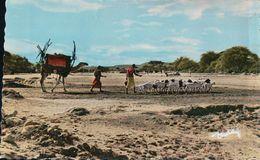 LE VISAGE DU PAYS SOMAL Caravane - Somalia