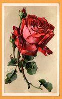 Catharina KLEIN - Fleurs - Rose Rouge - Carte Gaufrée - KOPAL - Klein, Catharina