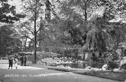 ANVERS - Les Flamants - Antwerpen