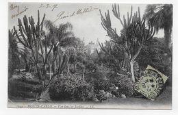 (RECTO / VERSO) MONTE CARLO EN 1907 - N° 1049 - VUE DANS LES JARDINS - TIMBRE ET CACHET DE MONACO - CPA - Exotic Garden