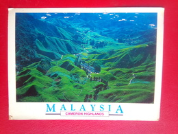 Cameron Highland - Malaysia