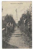 Scherpenheuvel :Pépinière De Montaigu 1907 - Scherpenheuvel-Zichem