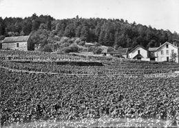 CPSM Dentellé - MOREY-SAINT-DENIS (21) - Aspect Du Vignoble Et D'une Partie Du Village En 1962 - Altri Comuni
