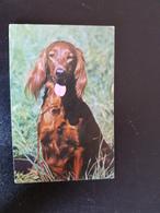 English Setter -   - Small Calendar -  1994 - Kalenders