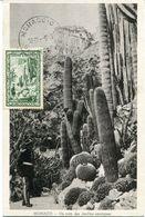 29892, Monaco,  Maximum  1949 Exotics Gardens,  Giant Cactus, Riesenkakteen - Sukkulenten