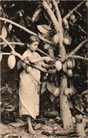 CEYLAN - SRI LANKA - Piucking Cocoa - - Sri Lanka (Ceylon)