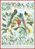 Oiseaux Illustré Par Adolphe Millot Recto Verso Larousse 1948 - Autres