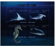 Peru 2018 Fishes Seahorse, Hammerhead Shark Mantaray - Fishes