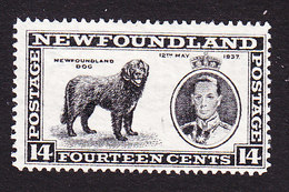 Newfoundland, Scott #238, Mint Hinged, Newfoundland Dog, Issued 1937 - Newfoundland