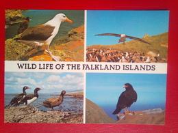 Falkland Birds - Falkland Islands
