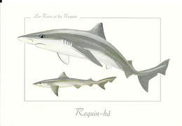 Les Raies Et Les Requins - Requin-hâ - Vissen & Schaaldieren