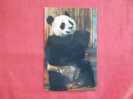 Ling Ling Female Giant Panada==  == Ref 2811 - Bears