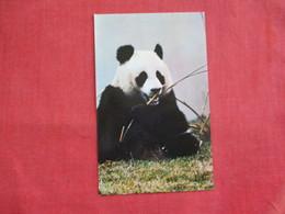 Hsing Hsing Male Giant Panada==  == Ref 2811 - Bears
