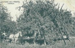 Culture Des Fruits / CANADA - C P A De Vente Par Correspondance D'un Atlas Géographique Par Une Sté Française - Alberta