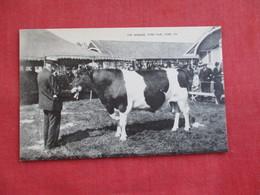 Cow  The Winner York Fair PA. ==  == Ref 2811 - Cows