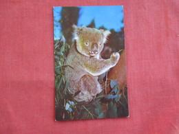 Koala Bear  Australia   == Ref 2811 - Bears