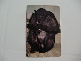 Maia Zoo Chimpanzé Portugal Portuguese Pocket Calendar 1990 - Small : 1981-90