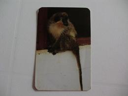 Maia Zoo Macaco De Rosto Preto Portugal Portuguese Pocket Calendar 1989 - Small : 1981-90