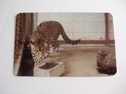 Maia Zoo Jaguar Portugal Portuguese Pocket Calendar 1989 - Small : 1981-90