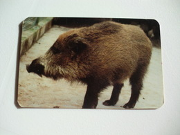 Maia Zoo Javali Portugal Portuguese Pocket Calendar 1989 - Small : 1981-90