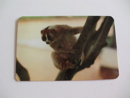 Maia Zoo Lemur Preguiça Portugal Portuguese Pocket Calendar 1989 - Small : 1981-90
