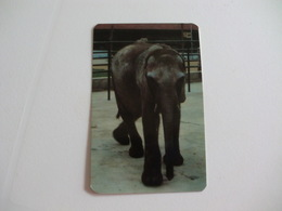 Maia Zoo Elephant Elefante Africano Portugal Portuguese Pocket Calendar 1989 - Small : 1981-90